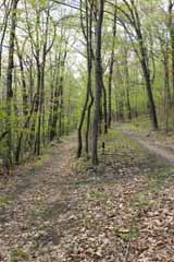 Five Mile Tree, Mauch Chunk Switchback