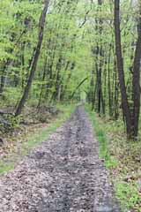 Five Mile Tree - Lentz Trail, Mauch Chunk Switchback