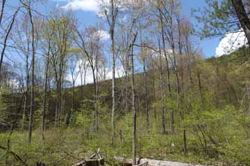 Five Mile Tree - Mt Jefferson, Mauch Chunk Switchback