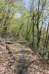Hacklebernie Tunnel - Five Mile Tree, Mauch Chunk Switchback